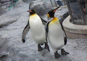 google research penguin