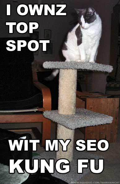 seo funny cat sitting